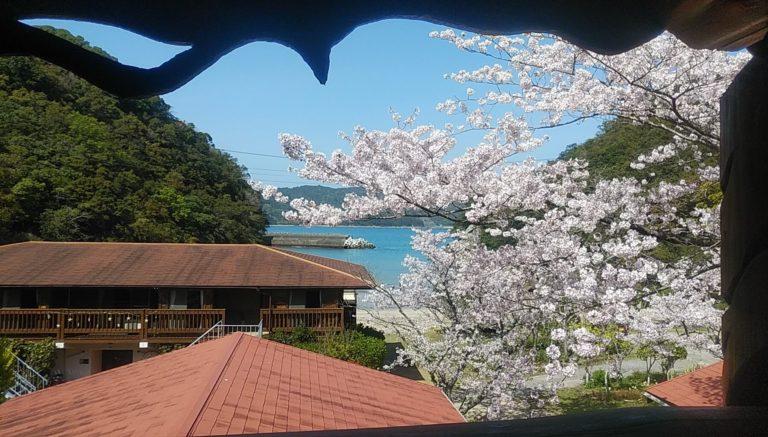 桜・振り返り